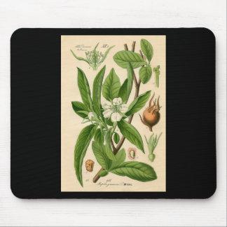 Impresión botánica - níspero (germanica del tapetes de raton