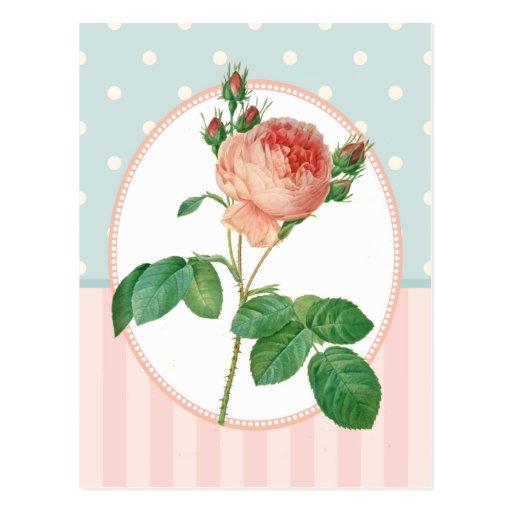 Impresión botánica subió rosa del collage del postales