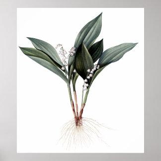 Impresión botánica superior del lirio de los valle póster