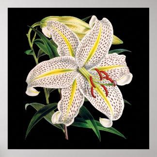 impresión botánica superior del lirio tigrado póster