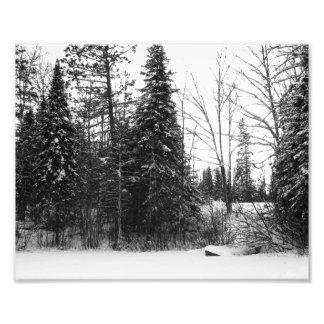 Impresión BW de la foto de la escena del invierno Cojinete