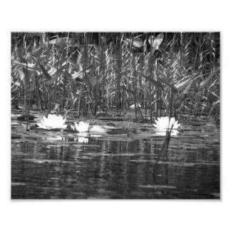 Impresión BW de la foto de Lillies del agua Cojinete
