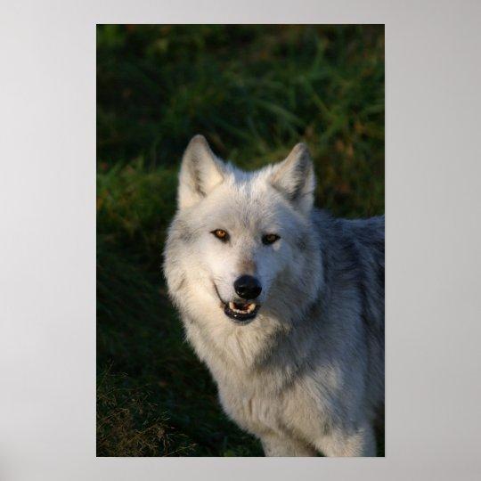Impresión canadiense del lobo de madera