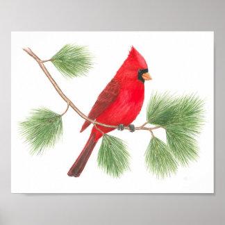 Impresión cardinal septentrional de la bella arte posters