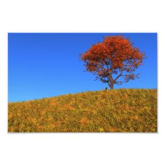 Impresión clara de la foto del día del otoño fotografía