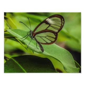 Impresión clara de la mariposa del ala fotografía