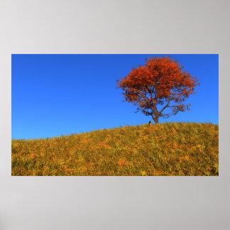 Impresión clara del día del otoño póster