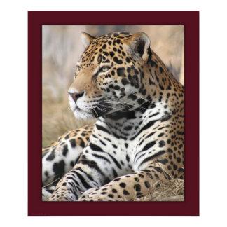 Impresión clásica -20x24 de Jaguar - otro Fotografía