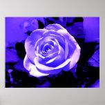 Impresión color de rosa azul brillante del poster