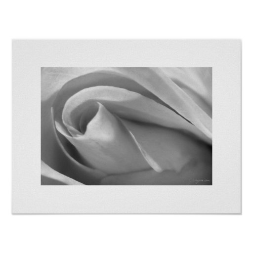 Impresión color de rosa blanco y negro del poster