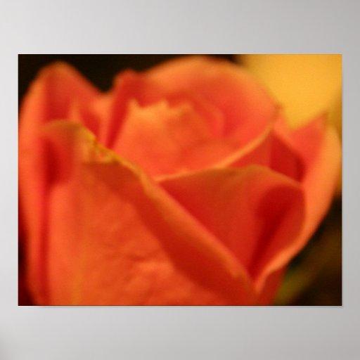 Impresión color de rosa coralina de la lona póster
