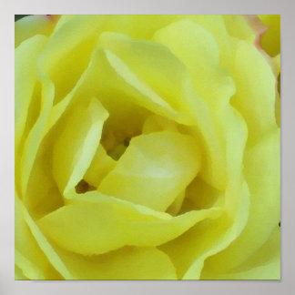 Impresión color de rosa poner crema amarilla posters