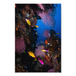 Impresión colorida de la foto del mar de coral fotografías