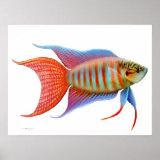 Impresión colorida de los pescados del Osphromemus