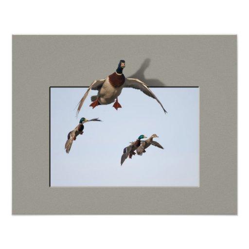 Impresión Composite-8 de los patos en vuelo Impresiones Fotográficas