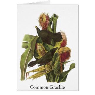 Impresión común de Juan Audubon Grackle Tarjeta De Felicitación