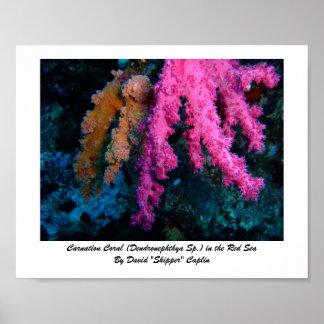 Impresión coralina del clavel posters