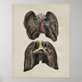 Impresión corazón-pulmón humana del vintage de la póster