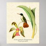 Impresión coronada azul del arte del colibrí