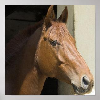 Impresión cuarta americana de la foto del caballo posters