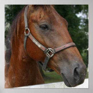 Impresión cuarta del poster del caballo