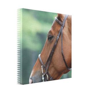 Impresión cuarta magnífica de la lona del caballo lona estirada galerias