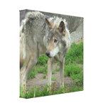 Impresión cuidadosa de la lona del lobo impresión en lona estirada