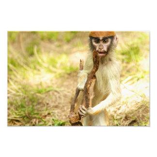 Impresión curiosa del mono del bebé impresiones fotograficas