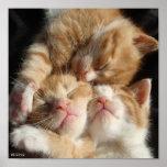 Impresión de 3 gatitos impresiones