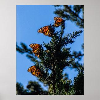 Impresión de cuatro mariposas de monarca poster
