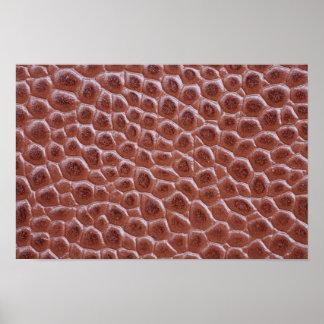 Impresión de cuero marrón de la textura del cocodr poster