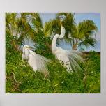 Impresión de dos gran pájaros del Egret Posters