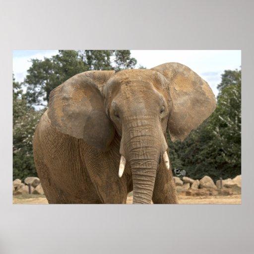 Impresión de Dumbo Impresiones