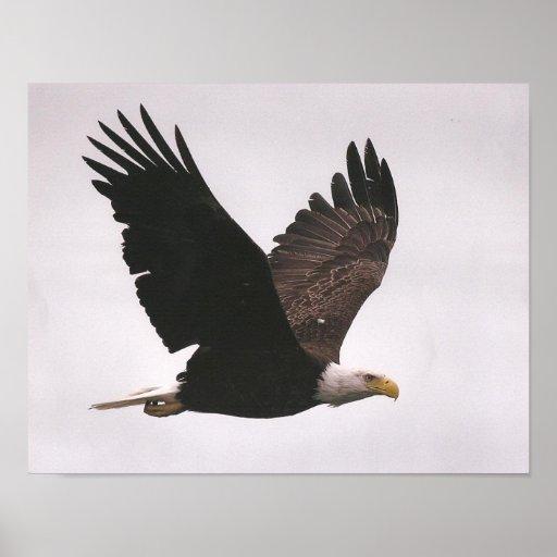 Impresión de Eagle Poster