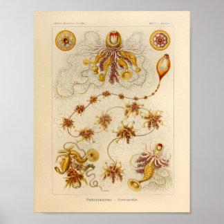 Impresión de Ernst Haeckel del color de