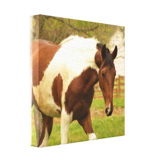 Impresión de itinerancia de la lona del caballo de impresión en lona estirada