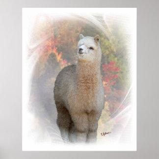 Impresión de la alpaca de la caída posters