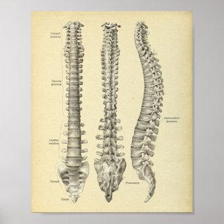 Impresión de la anatomía de la columna espinal póster