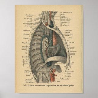 Impresión de la anatomía del alemán del vintage póster