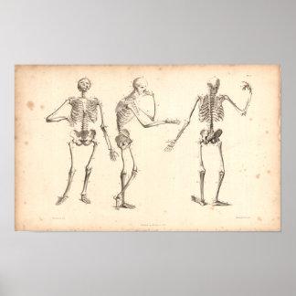 Impresión de la anatomía del vintage de 1833 esque póster