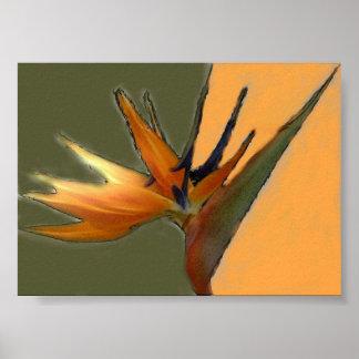 Impresión de la ave del paraíso poster