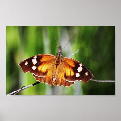 Impresión de la belleza de la mariposa póster