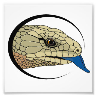 impresión de la cabeza del bluey (merauke) impresión fotográfica
