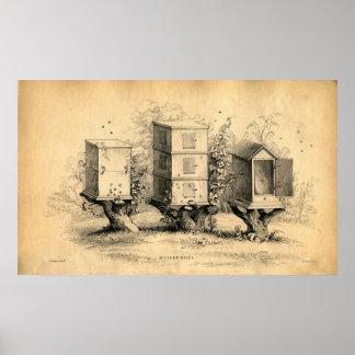 Impresión de la colmena de las colmenas de la apic poster