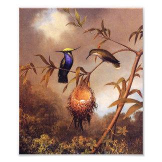 Impresión de la familia del colibrí fotografía