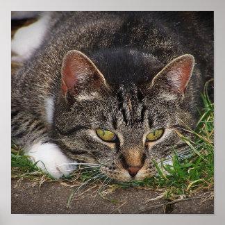 Impresión de la fijación del gato póster