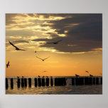 Impresión de la Florida de los pájaros de la puest Posters