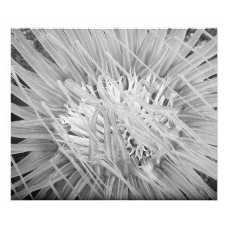Impresión de la foto de la anémona de mar fotografías