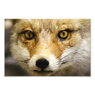Impresión de la foto de la cara del Fox