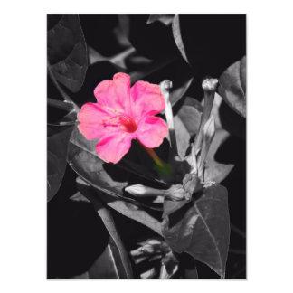Impresión de la foto de la flor de cuatro en punto